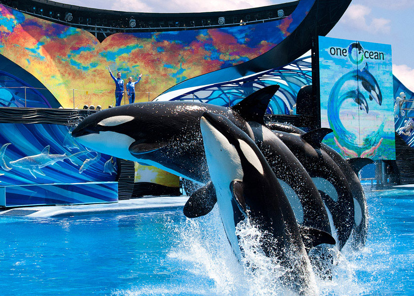One Ocean Orca Show at Seaworld in Orlando